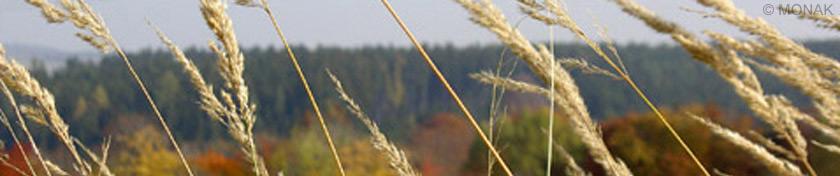 zelena-ocel